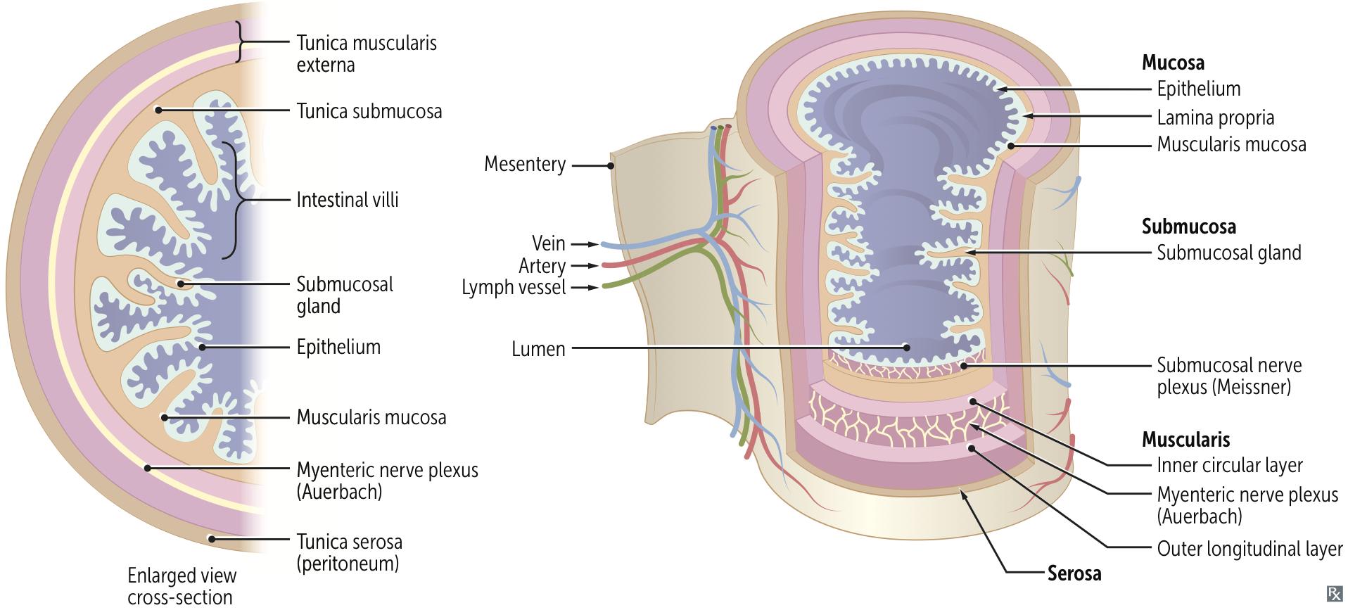 Mnemonics for Medicine